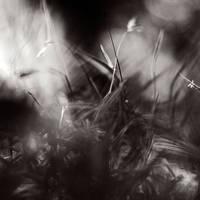 hidden beauty by SevimDalan