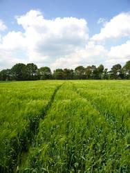 Wheat field by Robke22