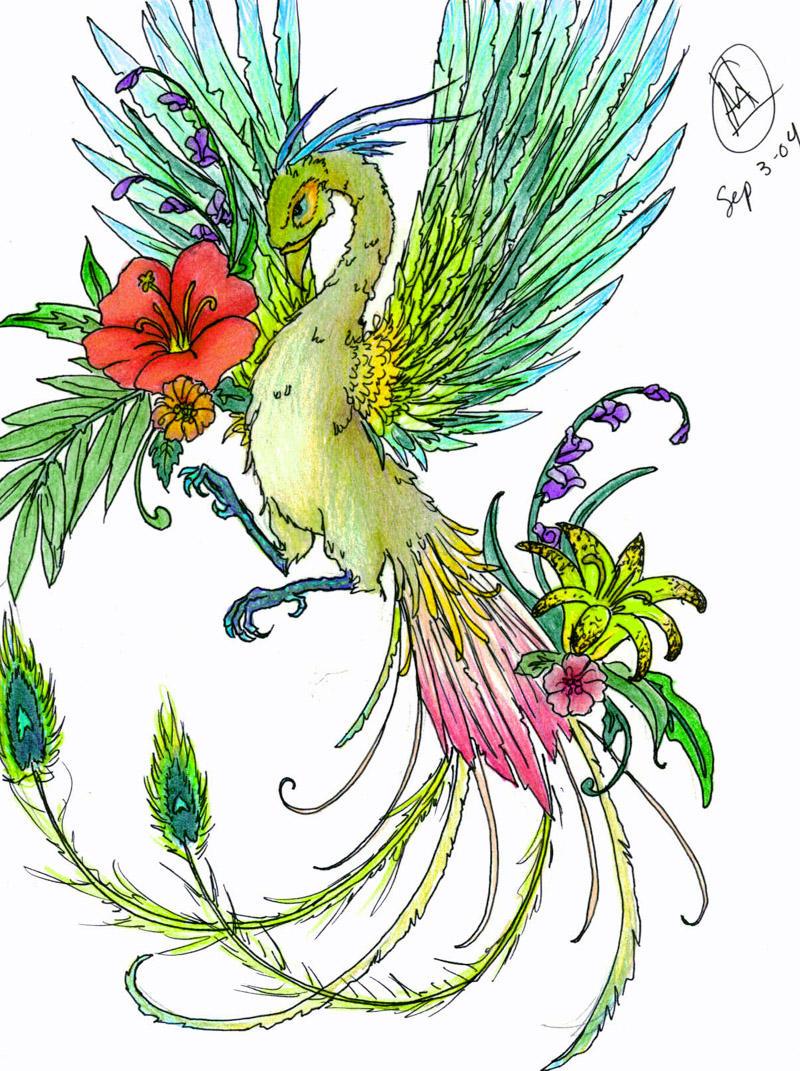 Bird of paradise animal drawing - photo#1