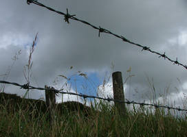 Princetown wire