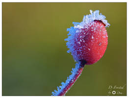 D-Frosted by RemiGarciaPhoto