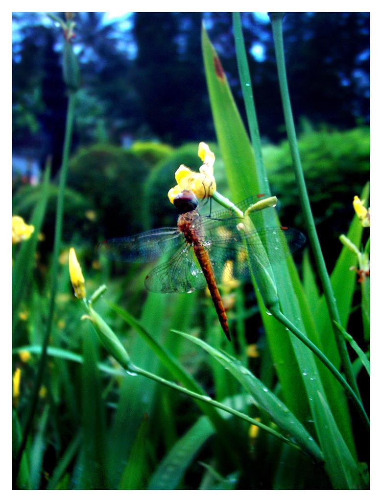 On a yellow flower by latebraking