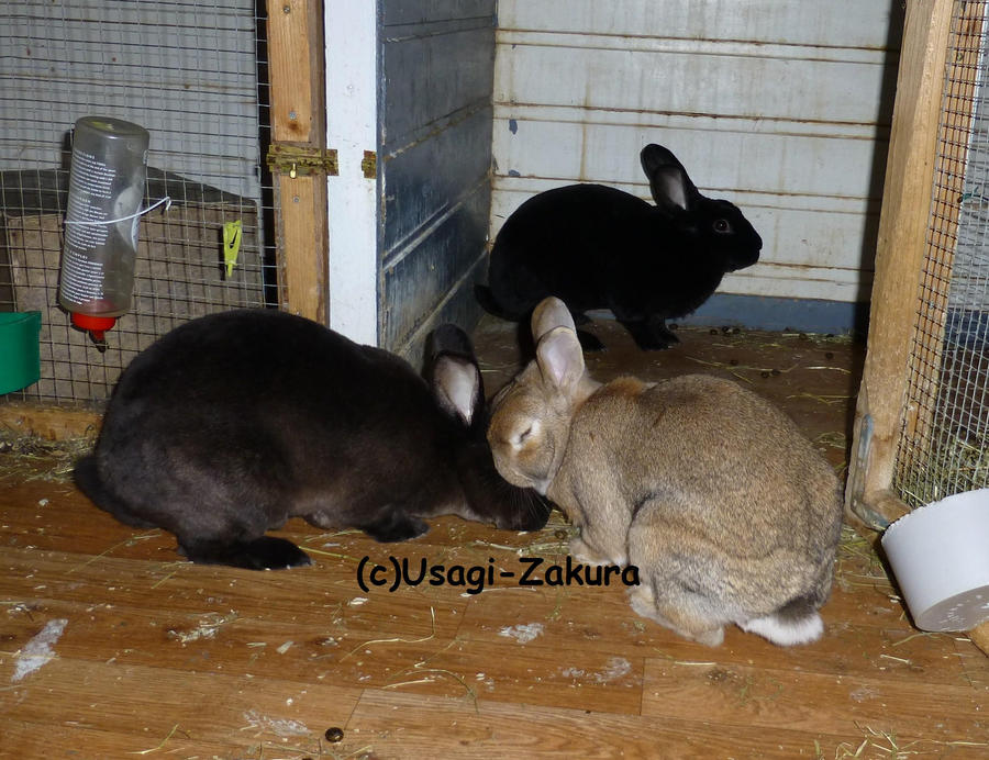 All of the bunnies! by Usagi-Zakura