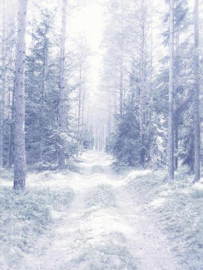 Cacería de Hielo - Página 2 Snowy_dreams_forest_stock_by_SilaynneStock