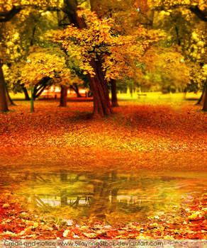 Sweet Autumn Stock I