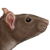 Free Avatar: Rat by dakazi