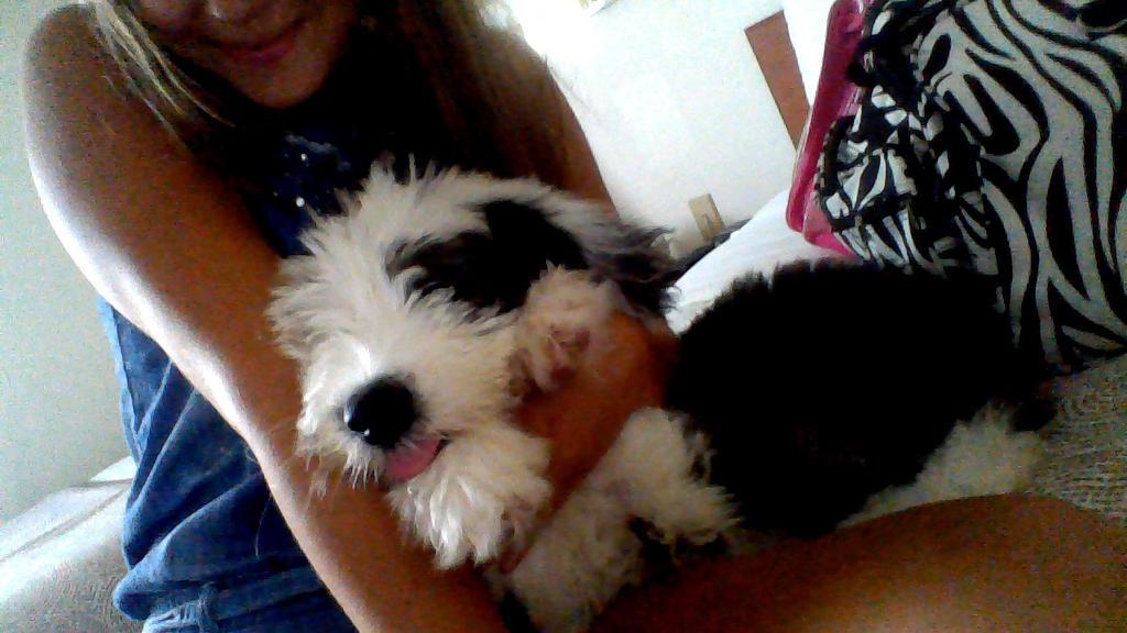 My puppy child by 17cherry