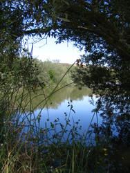 Secret Marsh