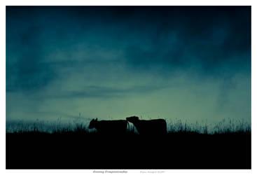 Evening Companionship by No-Limitation