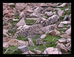 Find 6 Ptarmigans -Birds-