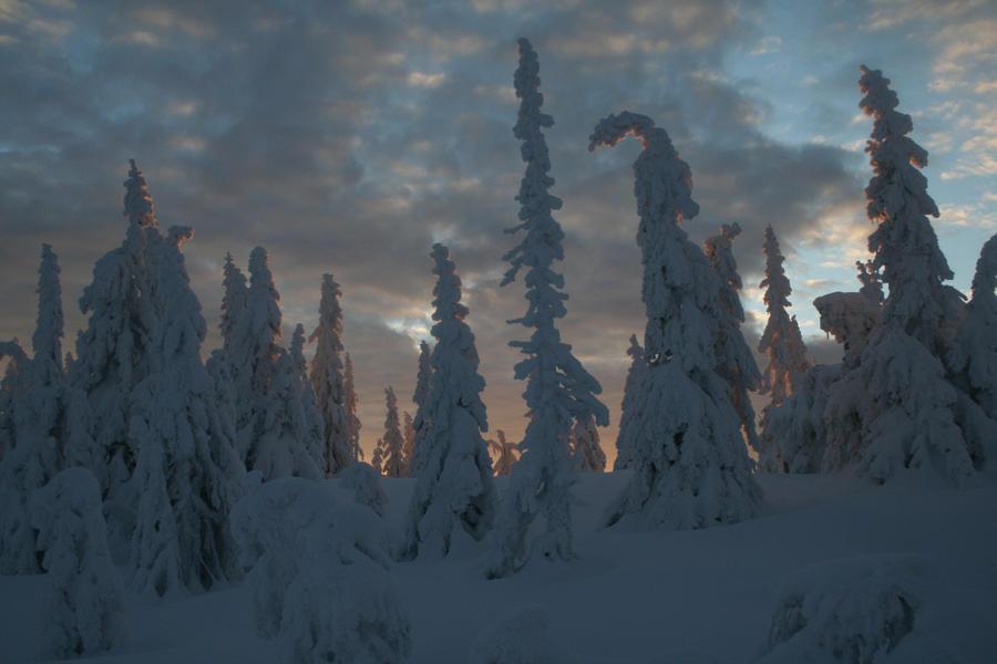 let it snow by shefeldio29