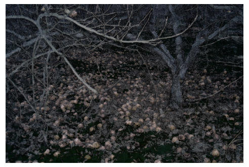 Rotten Apples by hopesandfears