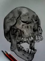 Skull by Hir0ya