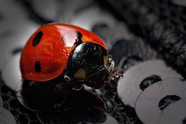 Ladybug Portrait by zar-rednaxelA