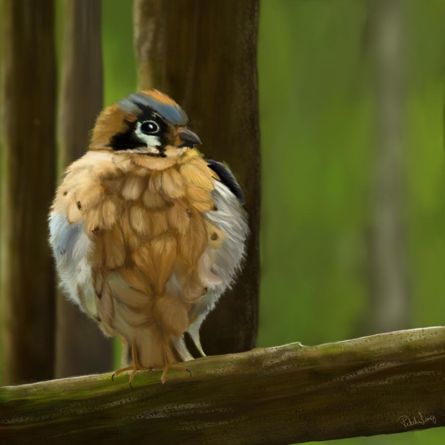The bird by ritahlang