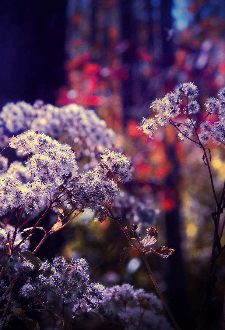 Fall Field Weeds by asetix