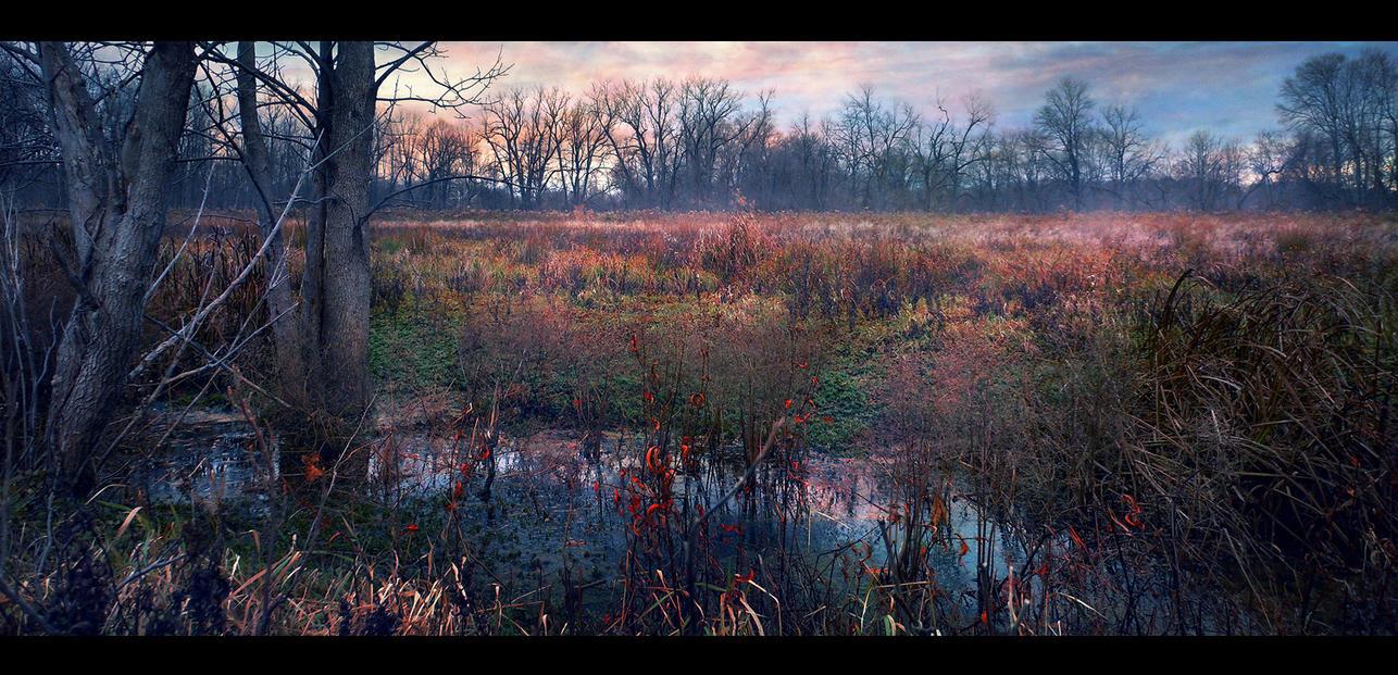 Open Field 8..... by asetix