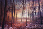 Woods .015