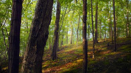 Woods .031