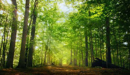 Woods .032