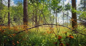 Woods .033