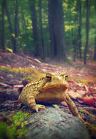 Toad on the Hill