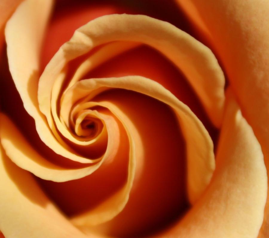 Swirl by Cia81