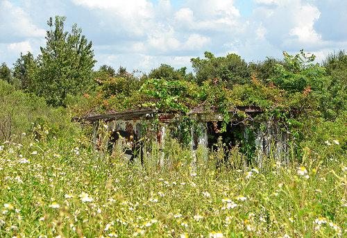 shack in flowers by Solsticerain