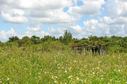 field of flowers by Solsticerain
