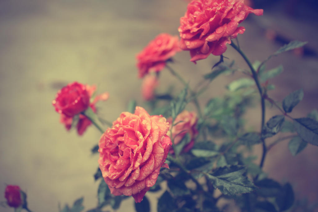 Flores Vintage by juanjosilva