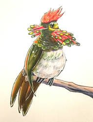 Tufted Coquette - SketchDaily