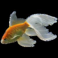 Png-1 Fish