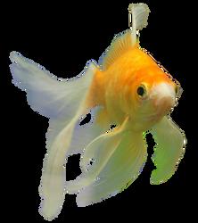 Fish png-2