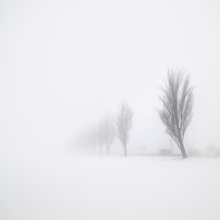 The fog's by anoxado