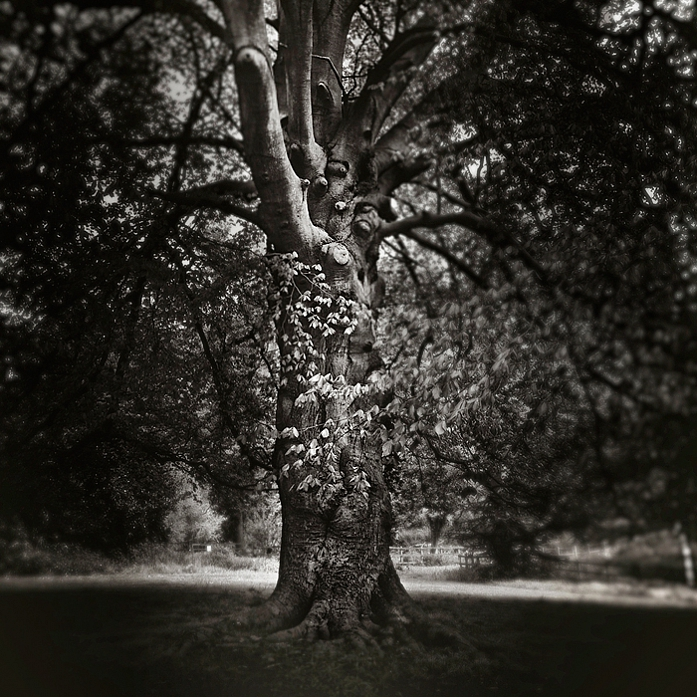 Tree by anoxado