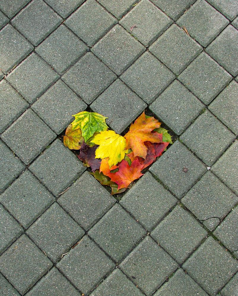 Phoenix rises in my heart by kyreeseq