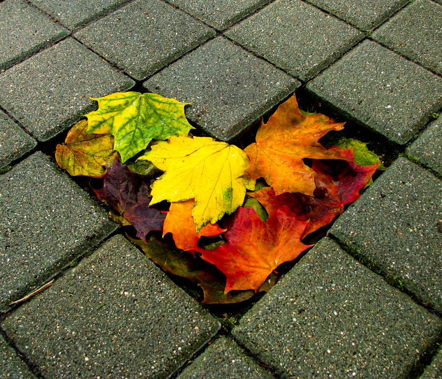 my heart in fall by kyreeseq