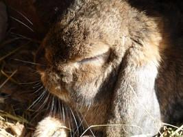 sleepin in the sun by truedtkopf
