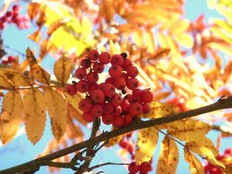 Autumn by truedtkopf