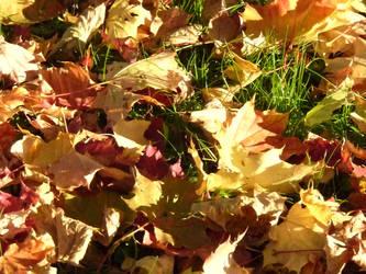 leaves by truedtkopf