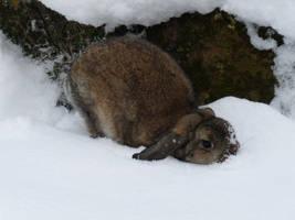 rumpels snow by truedtkopf