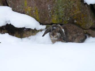 rumpels snow 2 by truedtkopf