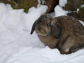 rumpels snow 3 by truedtkopf