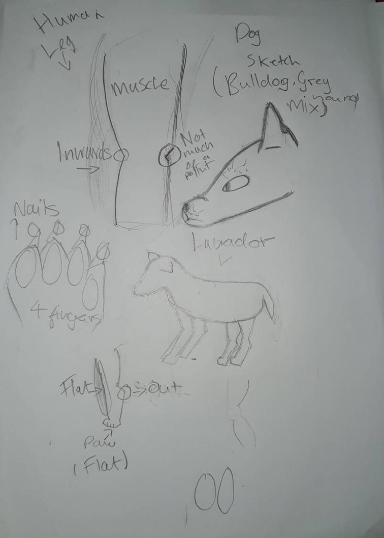 Anatomy Practise Dog Body By Articartistofficial On Deviantart
