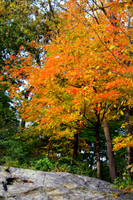 fire tree by Airleasd