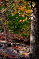 fall colors 7 by Airleasd