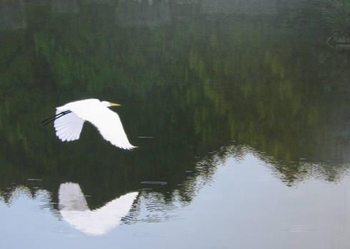 Great Egret at Bombay Hook