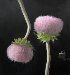 Maryland Wildflowers - Nodding Thistle