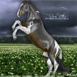 Too Witty - Black Tobiano - HEE Collection