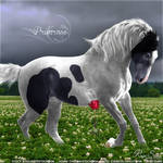 Primrose - Tobiano - HEE Collection